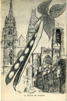 illustration haricot de soissons